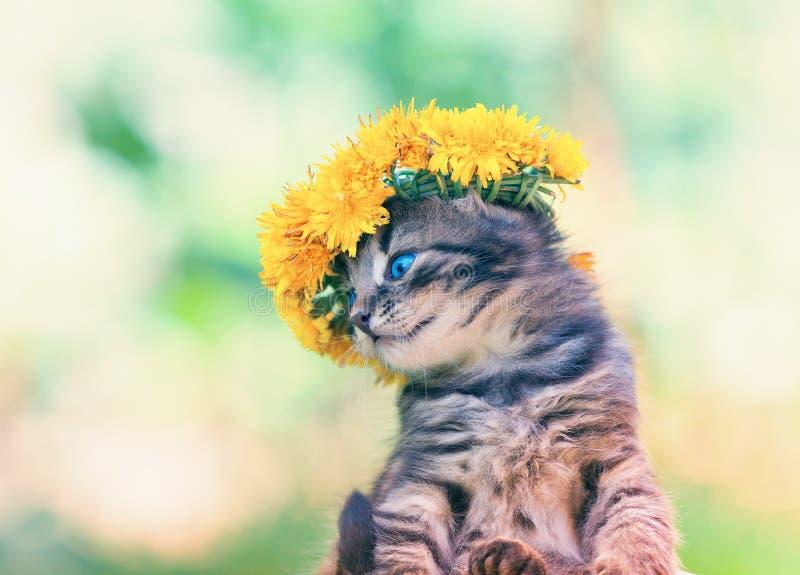 Kätzchen gekrönt mit einem Chaplet des Löwenzahns lizenzfreies stockfoto