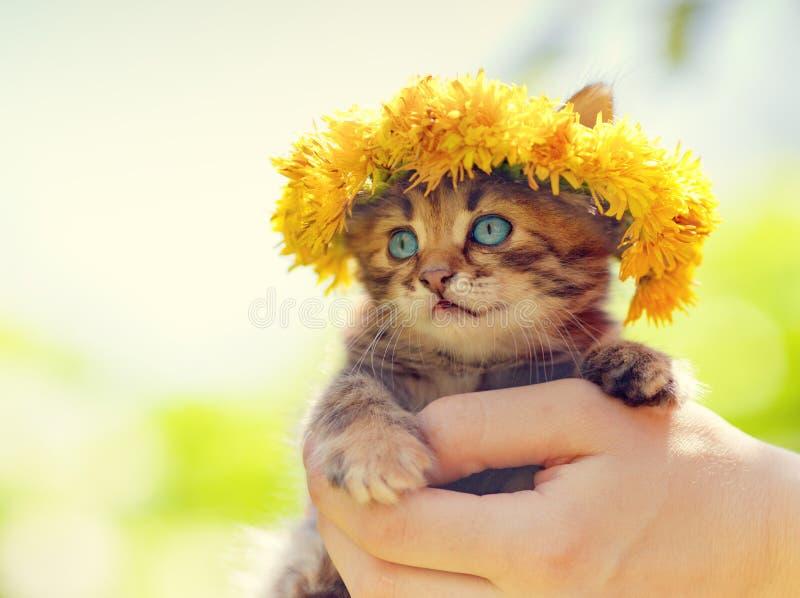 Kätzchen gekrönt mit einem Chaplet des Löwenzahns lizenzfreie stockbilder