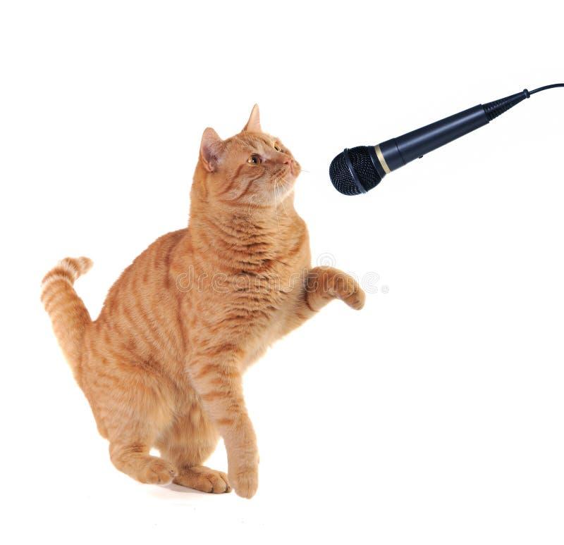 Kätzchen-Gesang stockfotos