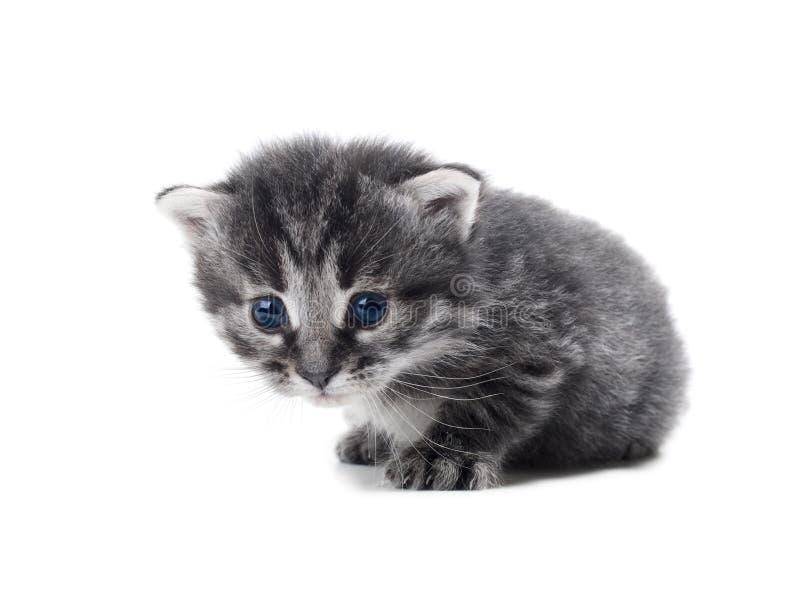 Kätzchen getrennt lizenzfreie stockfotografie