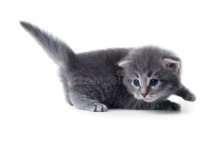 Kätzchen getrennt lizenzfreies stockbild