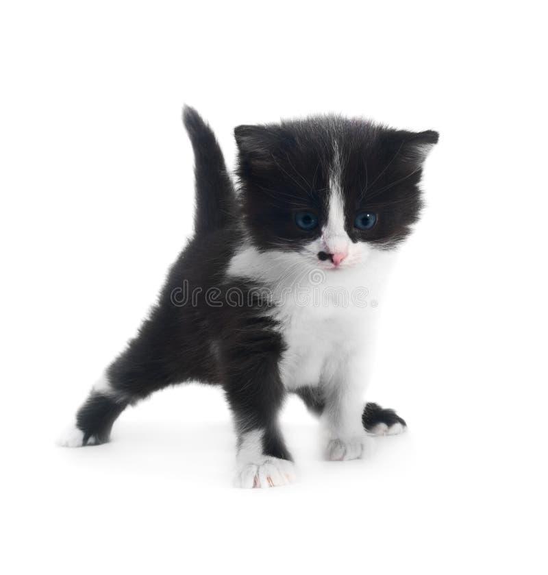 Kätzchen getrennt lizenzfreie stockfotos