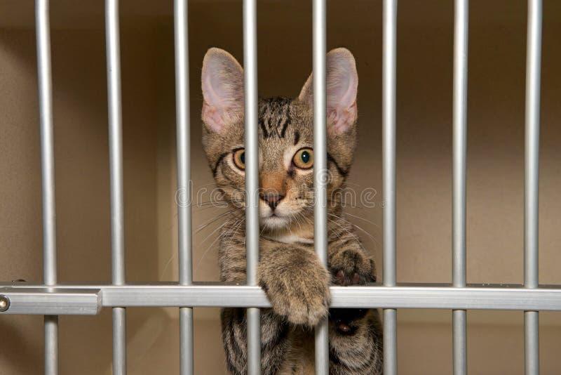 Kätzchen hinter Gittern am Tierheim stockbild
