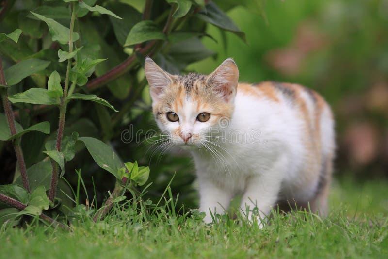 Kätzchen im Garten lizenzfreie stockbilder