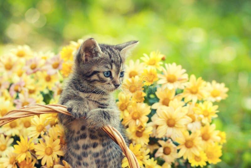 Kätzchen im Garten mit Blumen lizenzfreie stockfotos