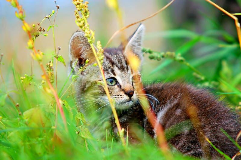 Kätzchen im Gras stockbild