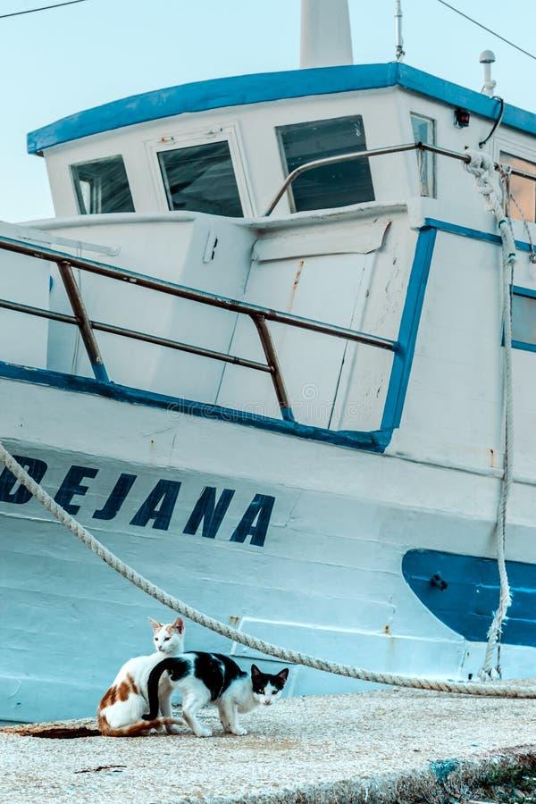 Kätzchen im Hintergrund des Schiffs lizenzfreie stockfotos