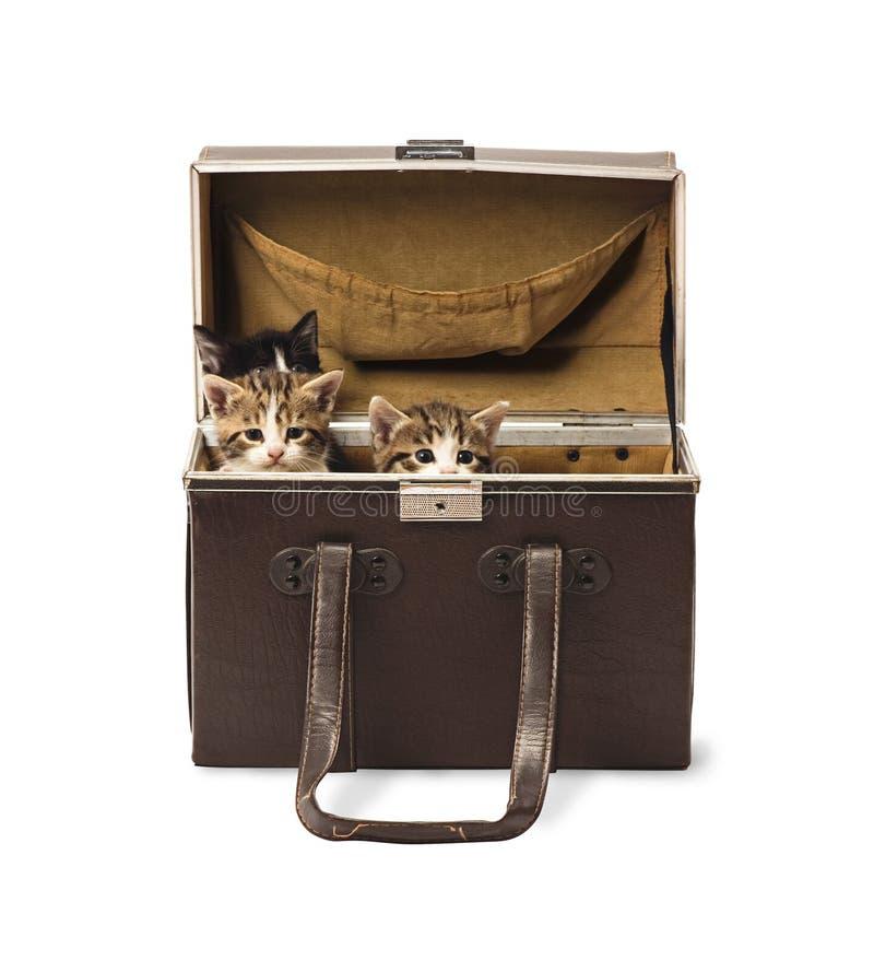 Kätzchen im Kasten lizenzfreies stockfoto