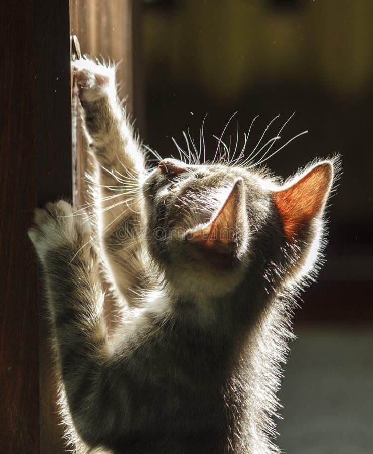 Kätzchen im Sonnenschein stockbild