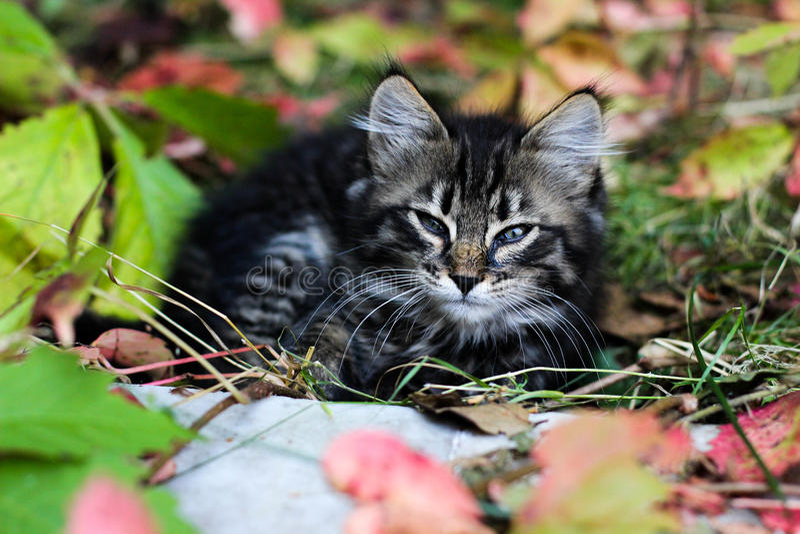 Kätzchen, Kätzchen, das auf der Straße im Herbst, Kätzchen im Herbstlaub schläft lizenzfreie stockbilder