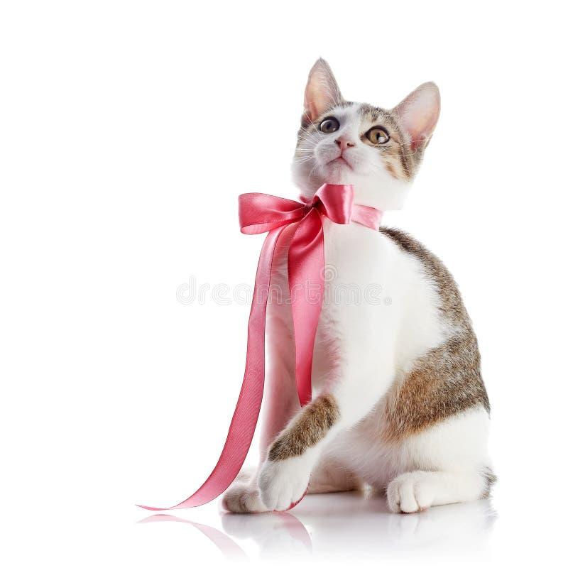 Kätzchen mit einem rosa Bogen lizenzfreies stockbild