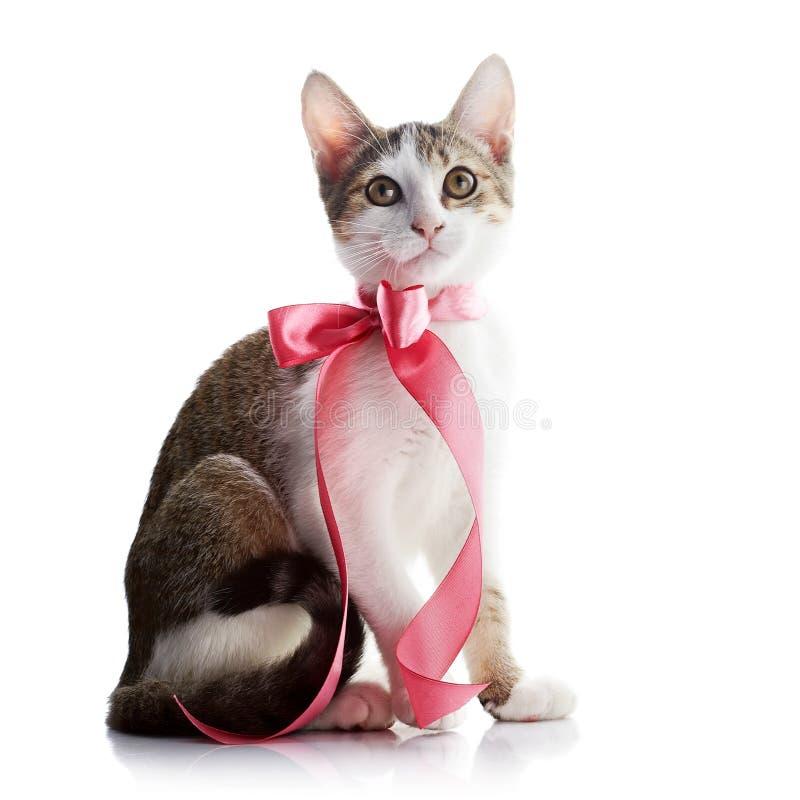 Kätzchen mit einem rosa Bogen lizenzfreies stockfoto