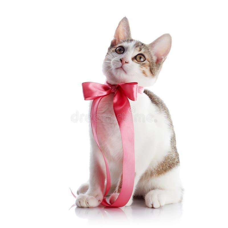 Kätzchen mit einem rosa Bogen stockbild