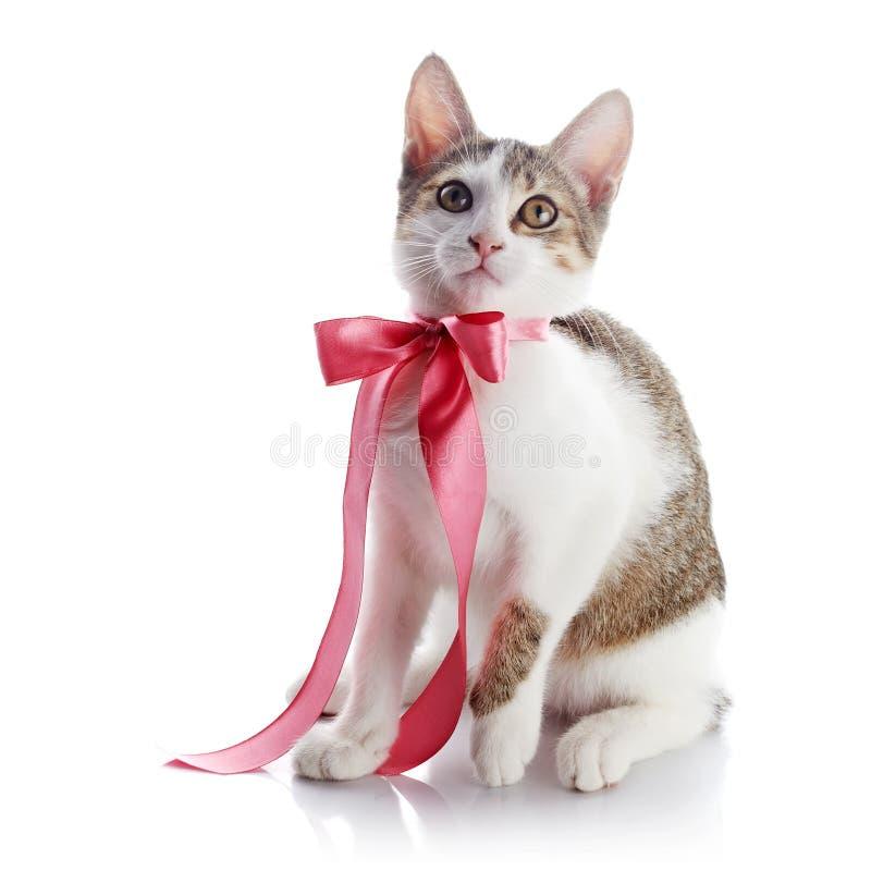 Kätzchen mit einem rosa Bogen stockbilder