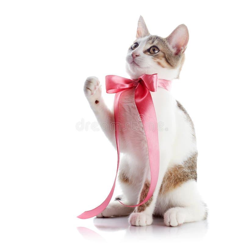 Kätzchen mit einem rosa Bogen stockfoto