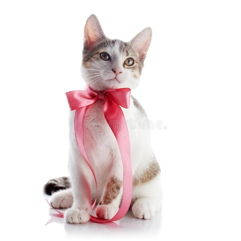 Kätzchen mit einem rosa Bogen stockfotografie