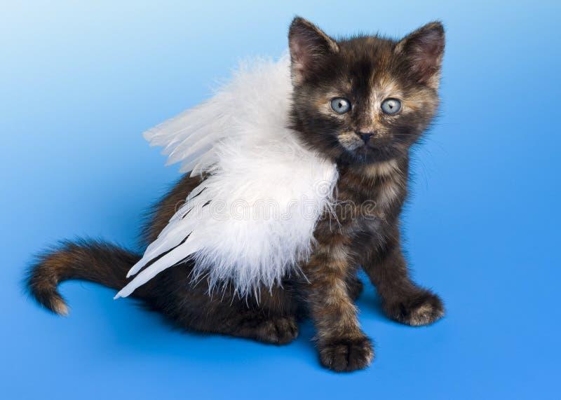 Kätzchen mit Flügel des weißen Engels