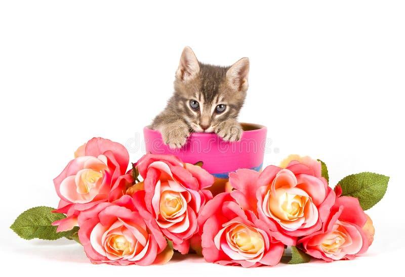 Kätzchen mit Rosen stockbilder