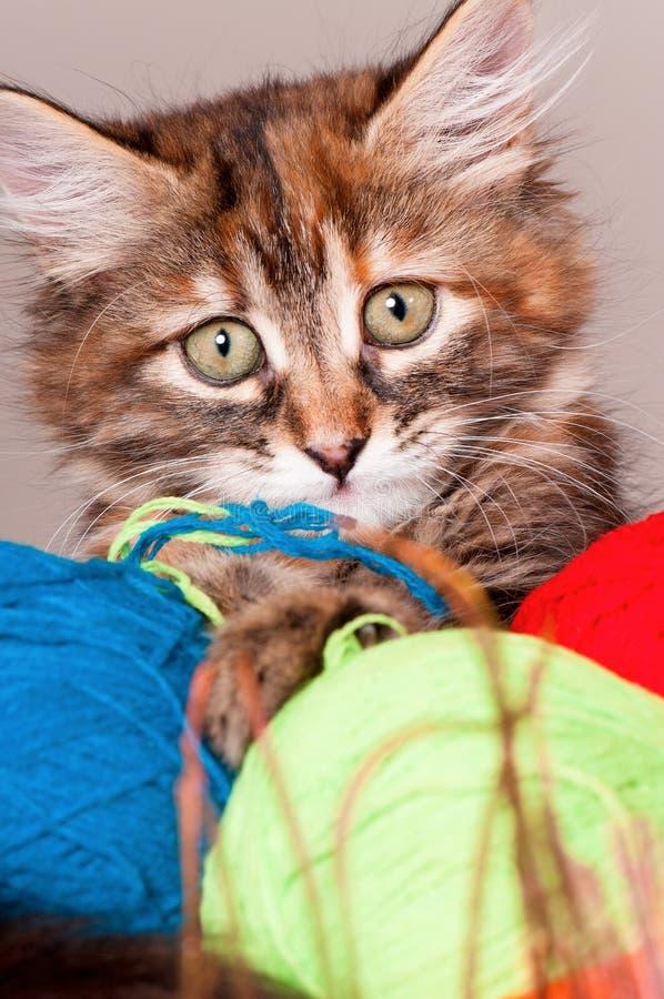 Kätzchen mit Schlaufen des Threads stockbild