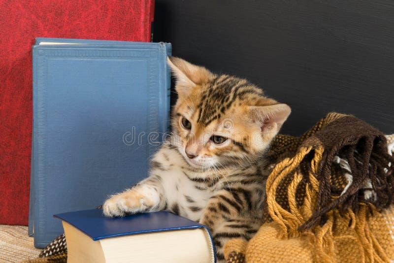 Kätzchen spielt auf einer Tabelle, die durch Bücher umgeben wird lizenzfreies stockbild