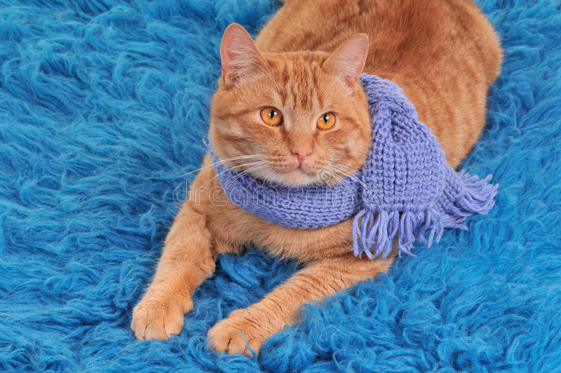 Kätzchen-tragender Schal stockfoto