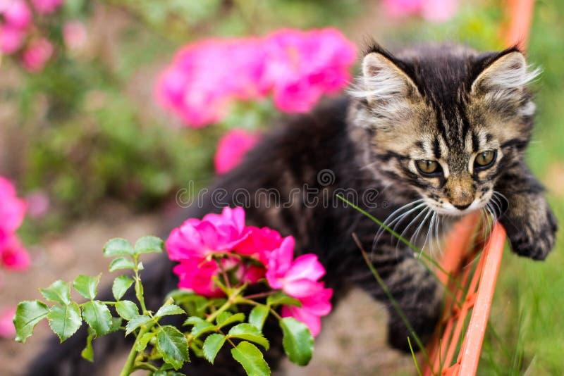 Kätzchen und Blume stockbild
