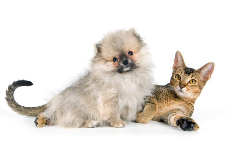 Kätzchen und der Welpe lizenzfreies stockbild
