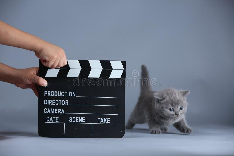 Kätzchen und ein clapperboard, Videoproduktion lizenzfreies stockbild