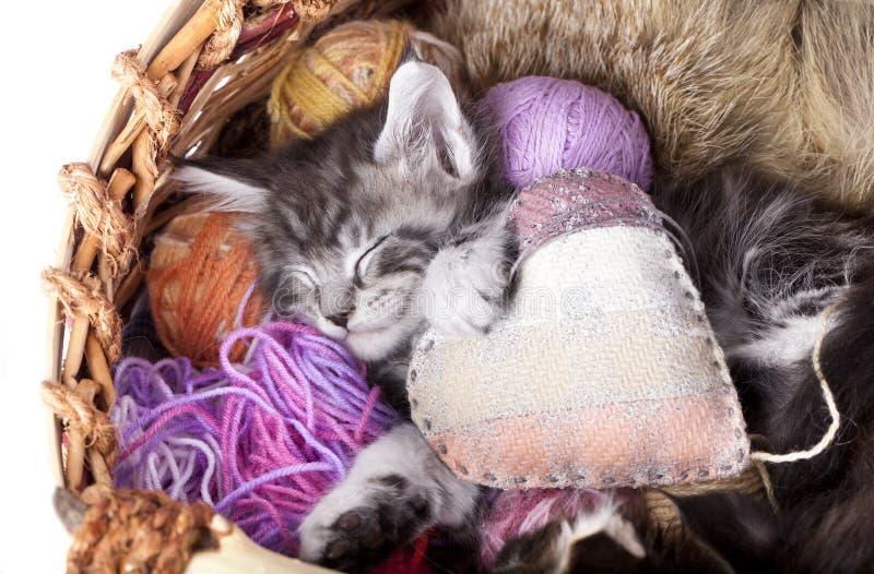 Kätzchen und Herzkissen stockbild
