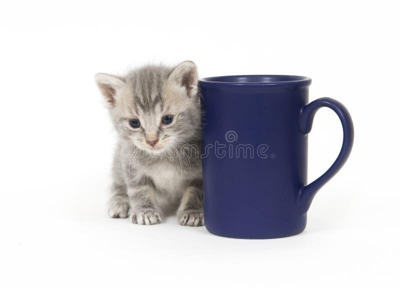 Kätzchen und Kaffeetasse lizenzfreie stockfotografie