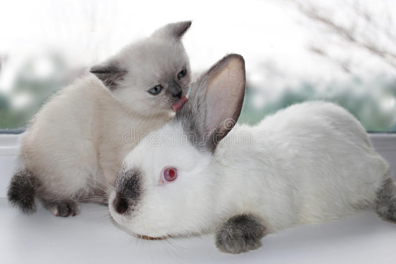 Kätzchen und Kaninchen lizenzfreies stockbild