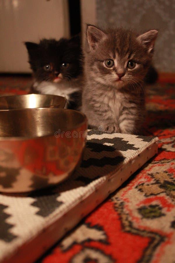 Kätzchen und tibetanische Gesangschüsseln lizenzfreies stockfoto