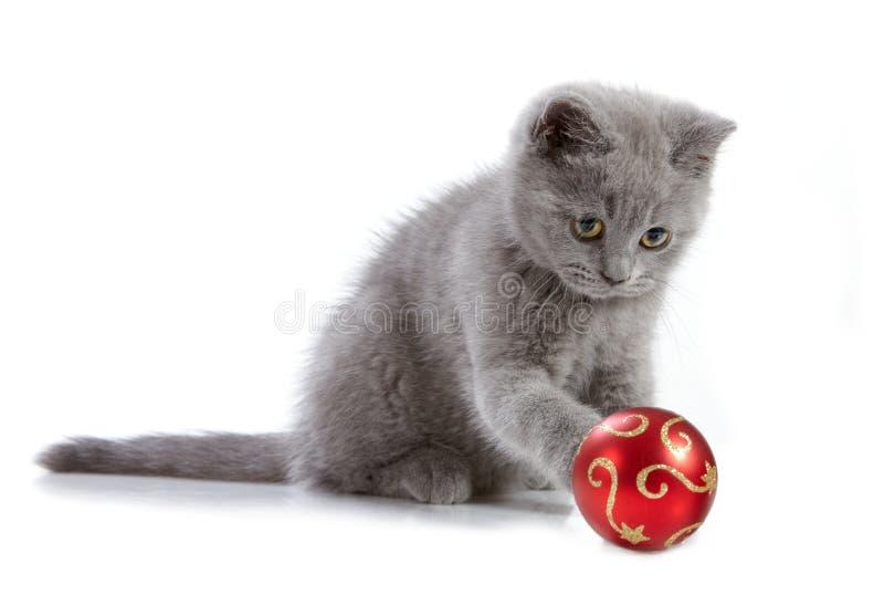 Kätzchen und Weihnachtsflitter stockbilder