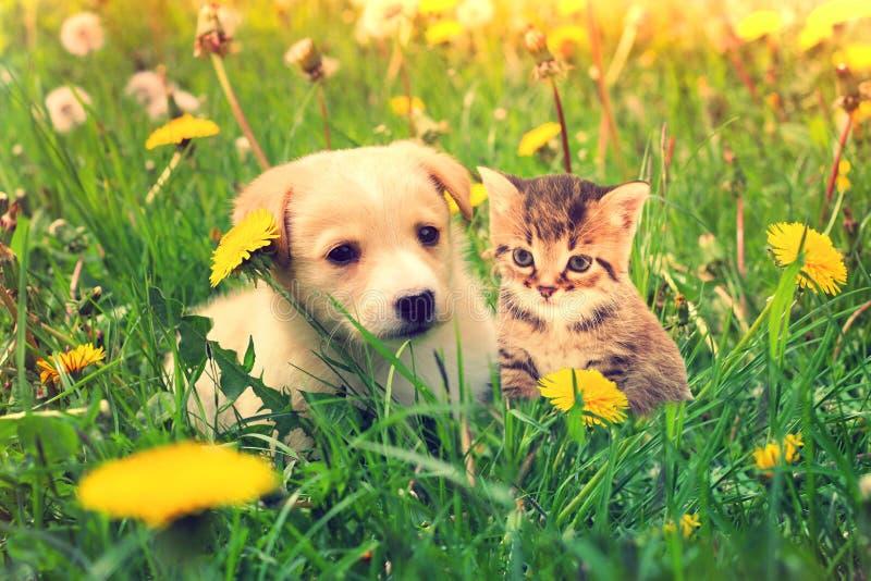 Kätzchen und Welpe stockbilder