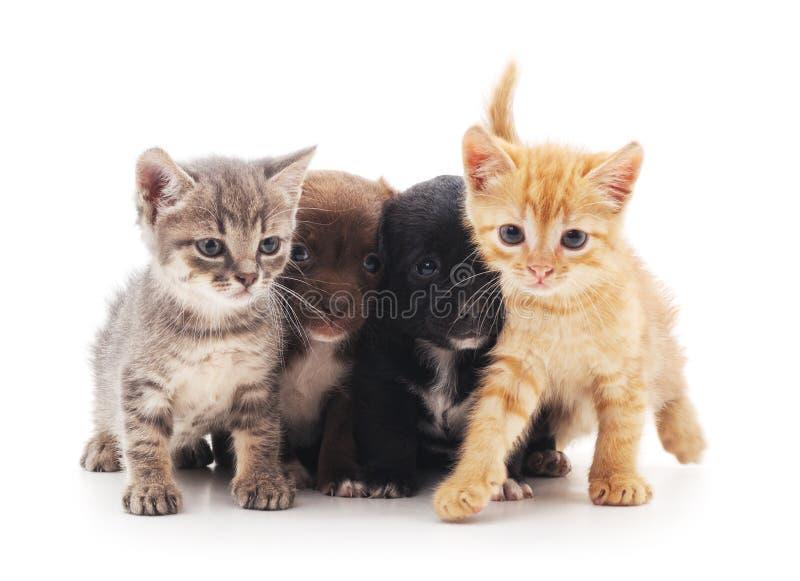 Kätzchen und Welpen lizenzfreies stockfoto
