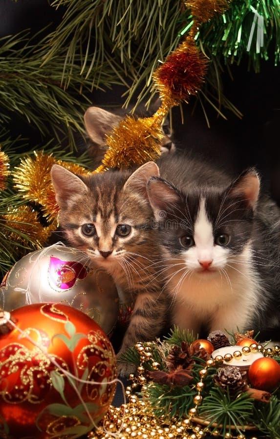 Kätzchen unter einem Baum des neuen Jahres stockbilder