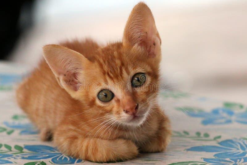 Kätzchen verlassen stockfoto