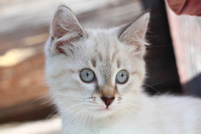 Kätzchen zum ersten Mal auf den Straßenwegen und dem haben Spaß stockbilder