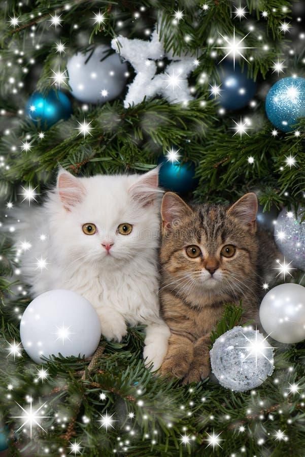Kätzchen zwei mit Weihnachtsdekoration stockbilder