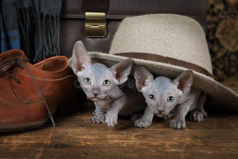 Kätzchen zwei unter dem Hut stockfotografie