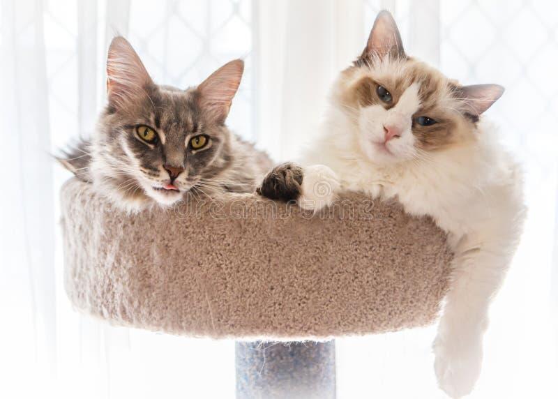 Kätzchenfreunde lizenzfreies stockbild