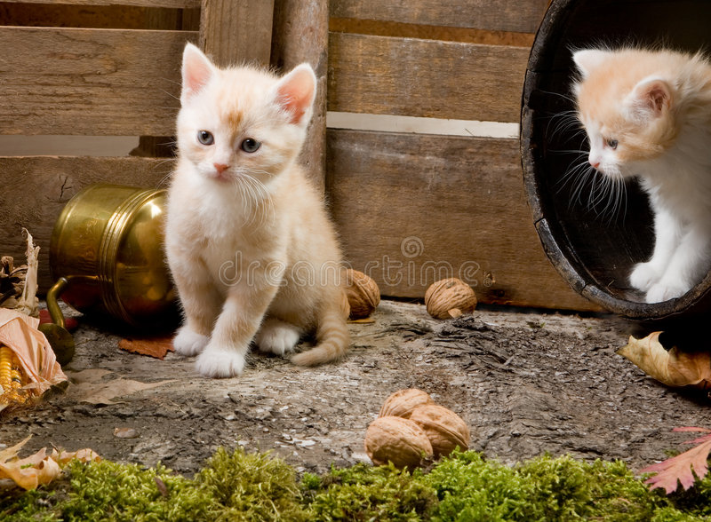 Kätzchengeschwister lizenzfreies stockbild