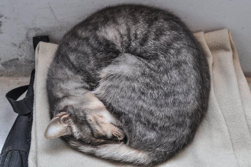 Kätzchenschlafen gekräuselt stockfotos