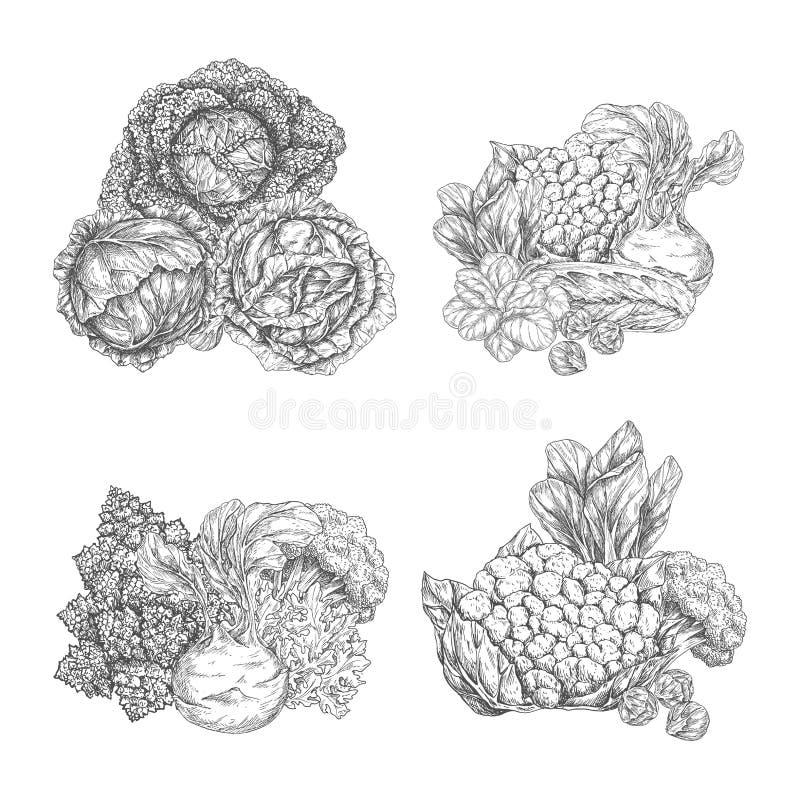 Kålgrönsaken och grönsallatsalladbladet skissar royaltyfri illustrationer