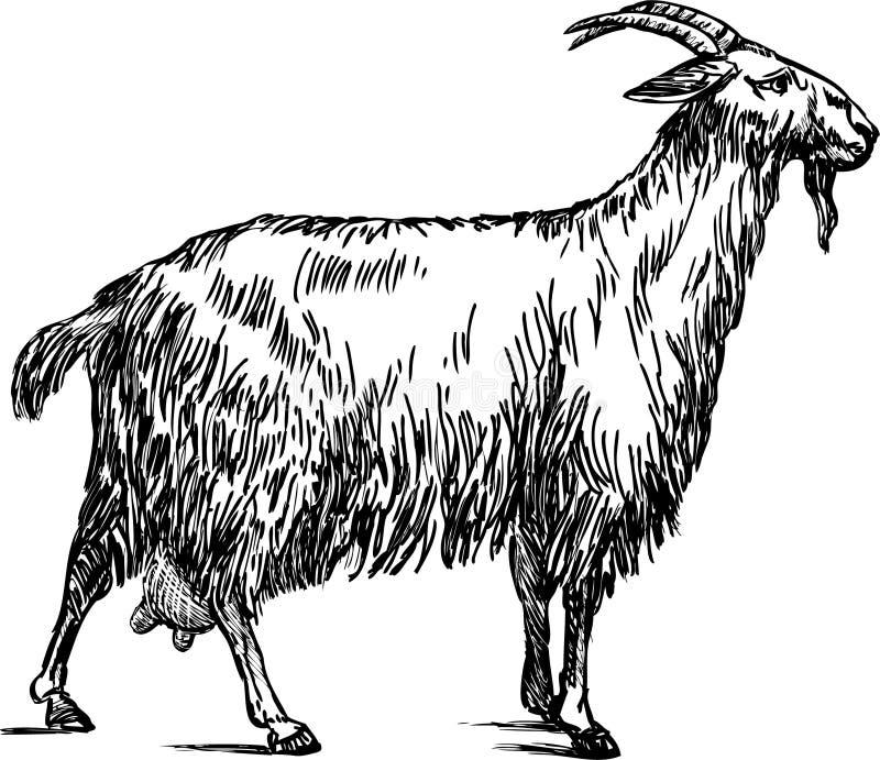 Kózka royalty ilustracja