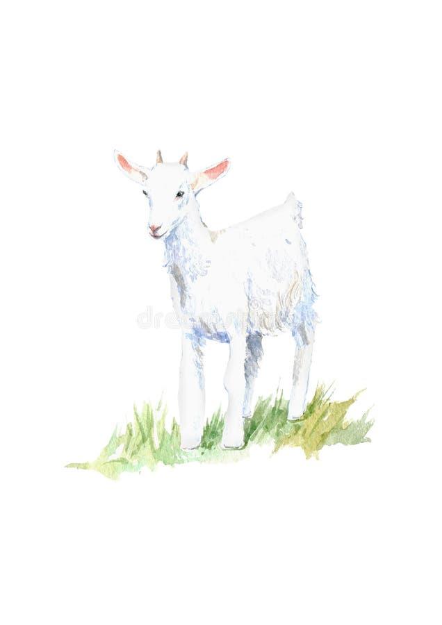 Kózka na trawie zwierząt gospodarstwa rolnego krajobraz wiele sheeeps lato ilustracji
