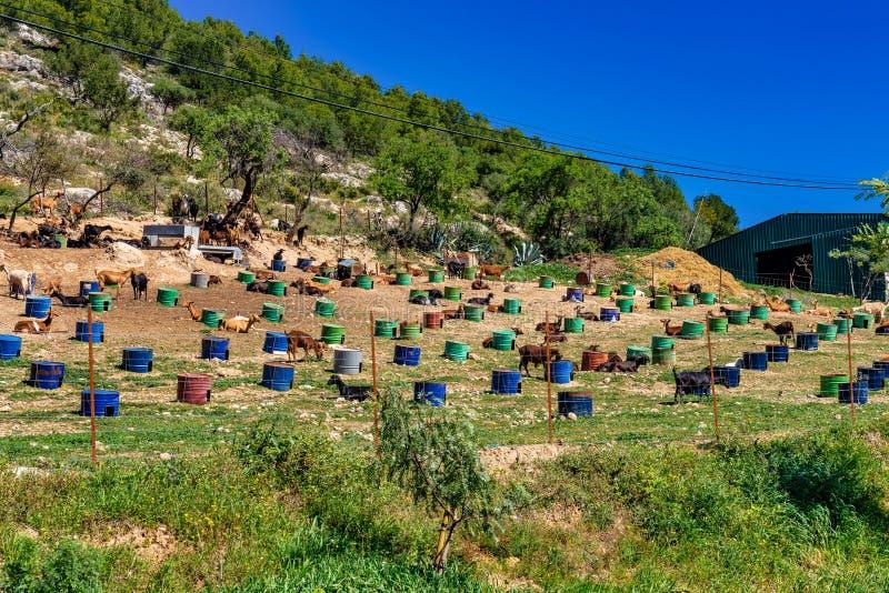 Kózki blisko Algodonales w gubernialnym Cadiz, Andalusia, Hiszpania fotografia stock