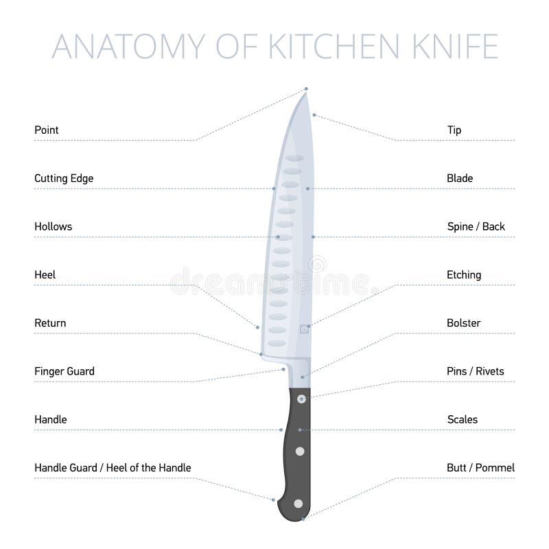 Kökkniven särar diagrammet Infographic plan vektor royaltyfri illustrationer