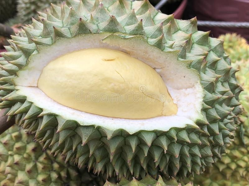 König der Früchte, Durian stockfotos
