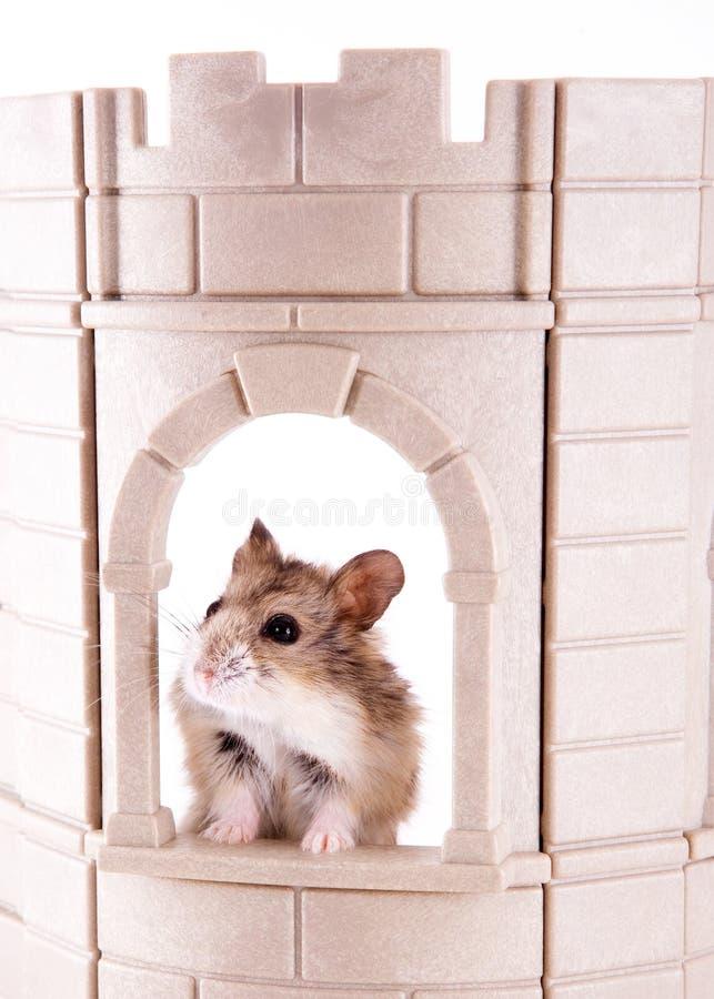 König des Schlosses lizenzfreies stockbild